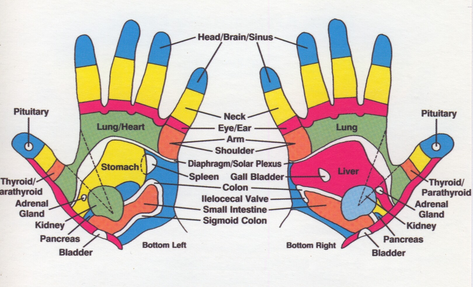foot reflexology Foot reflexology, acupressure, foot baths, foot massage sessions available at our new saugus location.